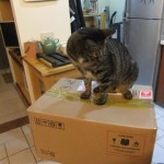 從警衛室拿到手的紙箱及比例尺,這麼大箱嚇我一跳 一口一